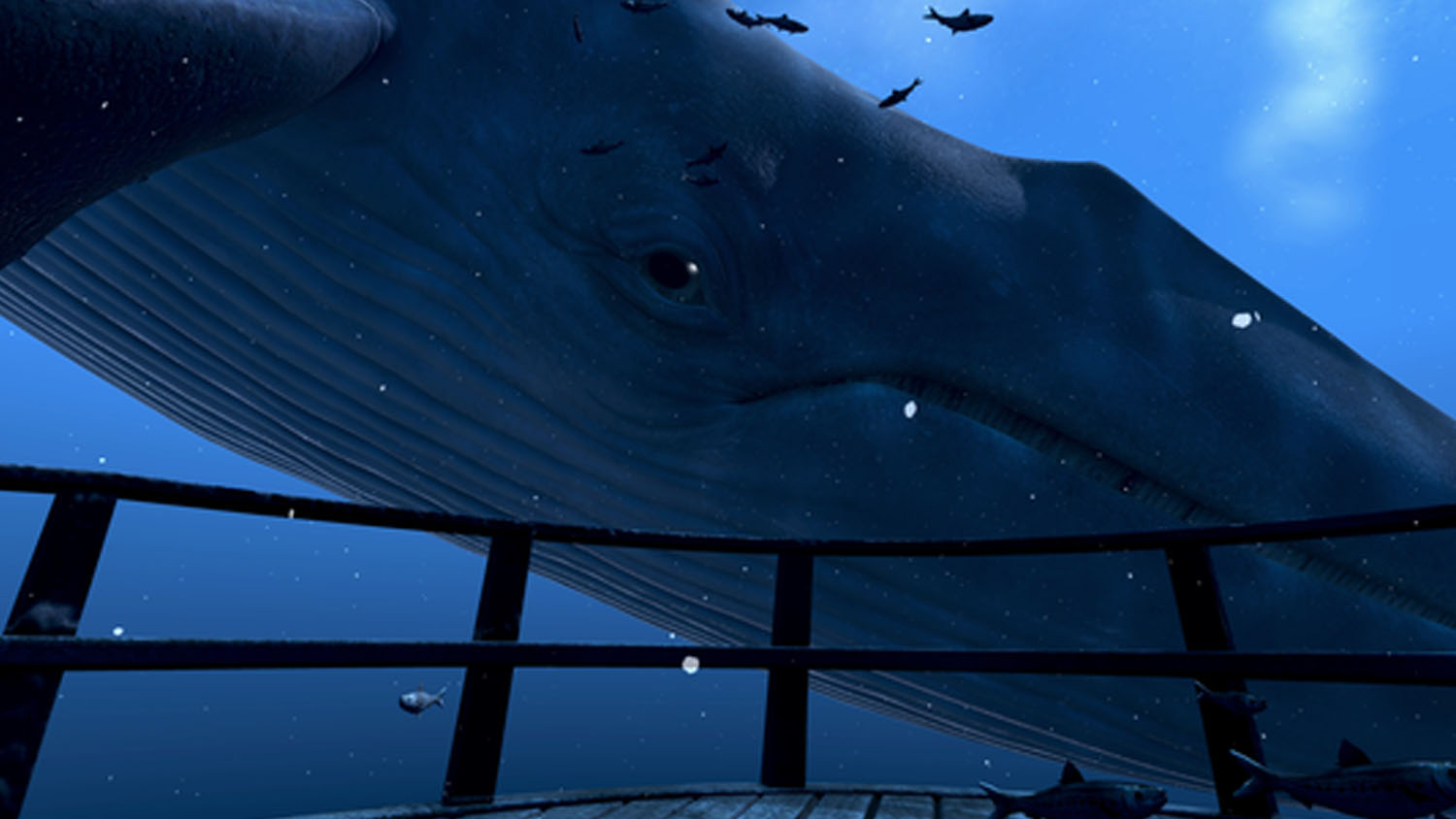 theBlue: Whale Encounter