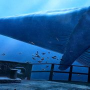 Whale Encounter